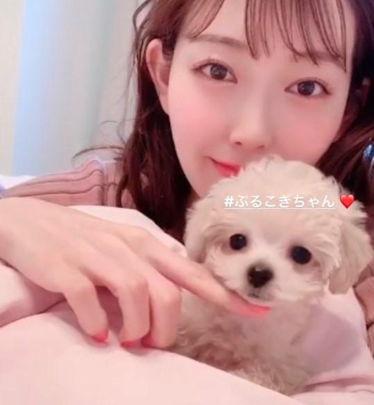 渡辺美優紀の愛犬ぷるこぎ